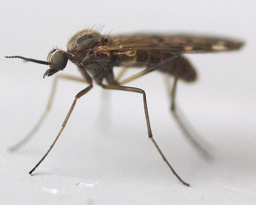 Pet viruses   Infectious Creatures